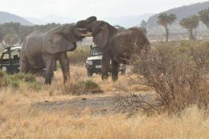 Laikipia is one of the Kenya's tourism gem with abidance of wildlife and cultures